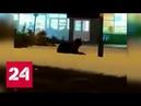 Жрачку учуял : в Башкирии в центре города на снегу отдыхал медведь - Россия 24