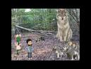 Animal totem: le loup
