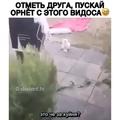 helga_cantarela video