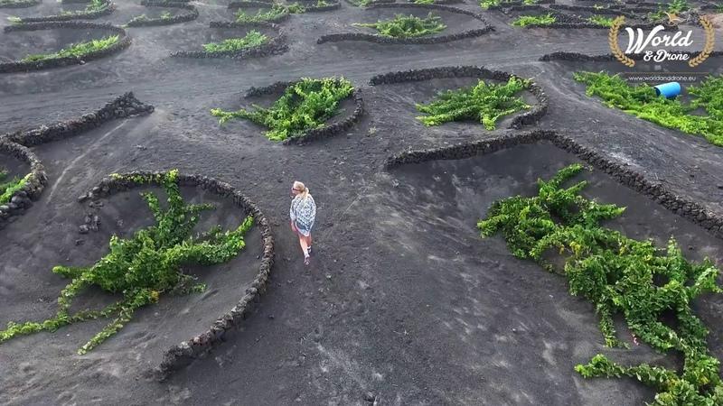 WorldDrone Lanzarote Volcanic wineyards 4K - Canary Islands Drone video