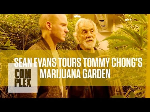 Tommy Chongs Medical Marijuana Garden   Complex