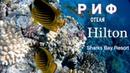 Подводный Мир, Коралловый Риф отеля Hilton Sharks Bay Resort. Египет, Шарм - Ель - Шейх.