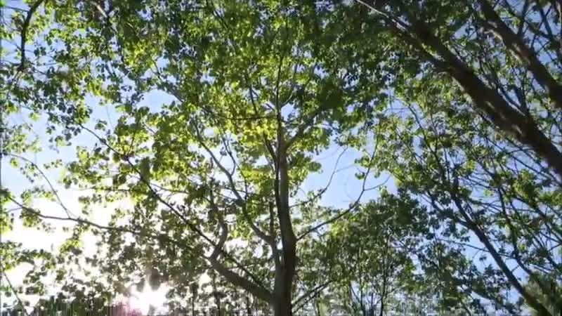 Лайфхак для дачи_ как спилить дерево-Дачники
