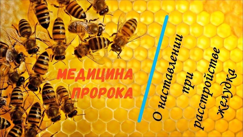 МЕДИЦИНА ПРОРОКА / О наставлении при расстройстве желудка