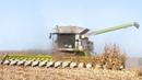 🇫🇷 XXL CORN Harvest / Moisson Maïs in FRANCE ! 16 ROWS Lexion 770