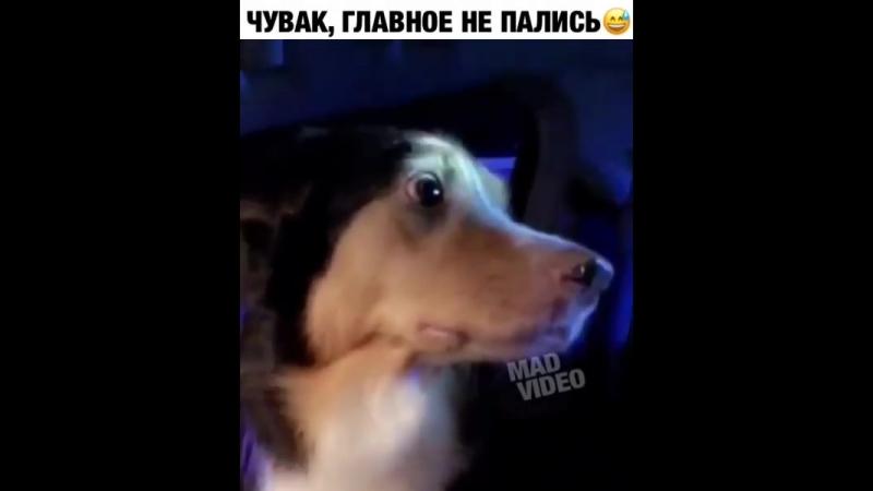 Собака верный друг ,прикроет в трудною минуту