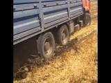 Мамонт застрял в Поле (КамАЗ 6520 Зерновоз) #PEREGRUZ
