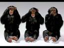 Валентин Трум: Очень резко, но откровенно и правда, молчание прекращено!