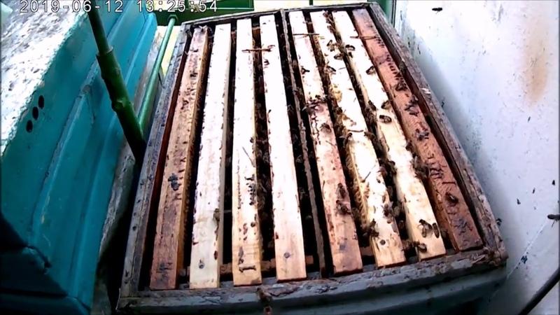 Пчелиный напад.Профилактика клеща Варроа. Создаём отводки Фумисан в безрасплодный период.