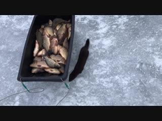 Хулиган на рыбалке)