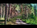 Красота родных просторов / Relax вело прогулка по сосновому лесу