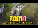 Топ 9 самых гламурных собачек   Top 9 most glamorous dogs