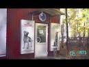 Пример видео для ветеринарной клиники