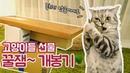 고양이들의 구독자 선물 꿀잼 개봉기 2탄
