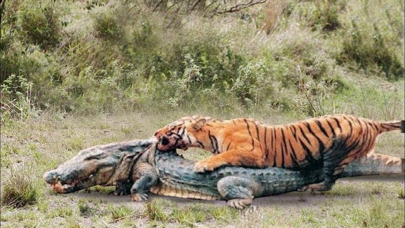 ТИГР В ДЕЛЕ Тигр против медведя крокодила слона кабана