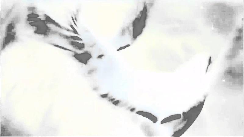 Футаж-Птицы 6