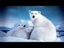 Animals and birds of the Arctic Животные и птицы Арктики Познавательное видео для детей