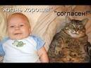 Смешные коты с ОЗВУЧКОЙ от Domi Show - Приколы МЕМЫ