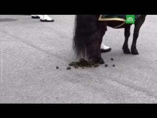 Пони навалил кучу перед Елизаветой II