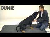 Как собаки реагируют на фокусы. Часть 1.