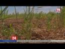Крымские аграрии намолотили 906 тыс. тонн зерна. Убирают поздние зерновые,технические культуры и готовят землю под посев озимых