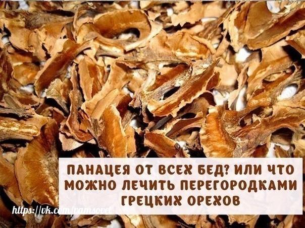 Панацея от всех бед Или что можно полечить перегородками грецких орехов