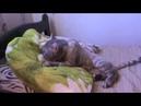 кот в Крыму