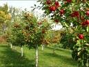 В Нижнем Тагиле появится фруктовый сад