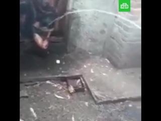 В Ростовской области вор провалился в туалет