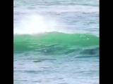 Дельфин сбил человека