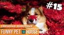 СМЕШНЫЕ ЖИВОТНЫЕ И ПИТОМЦЫ 15 ОКТЯБРЬ 2018 Funny Pet House Смешные животные