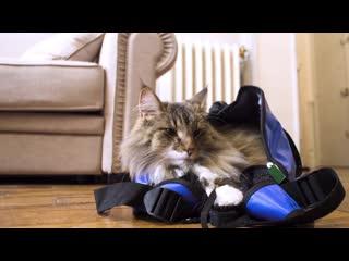 Везём кошку к врачу: 10 советов по подготовке