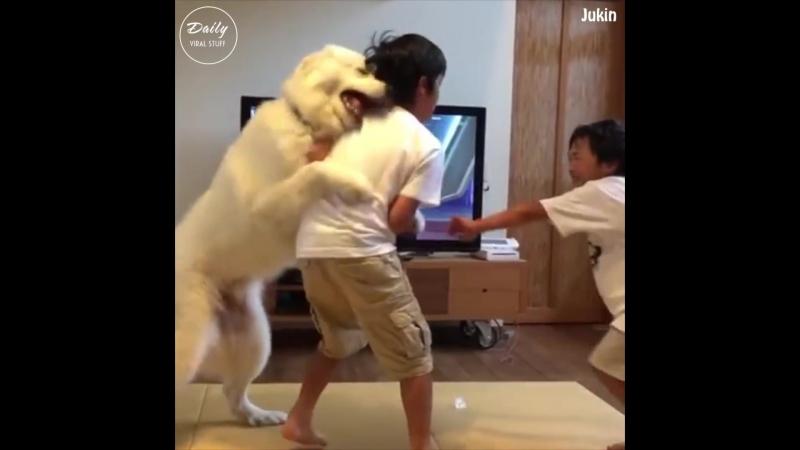 Собакен лучший друг!