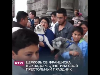 Жители Эквадора привели сотни домашних животных на благословение в церковь