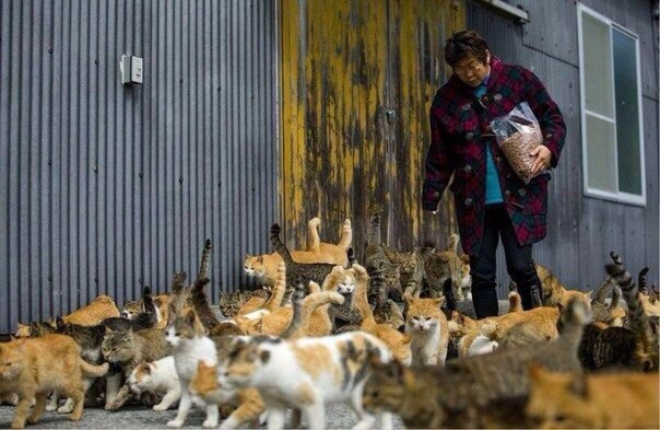 Остров Аосима (Aoshima)  один из десятков «кошачьих островов» Японии. На нем живут 120 котов, что в шесть раз больше, чем людей.