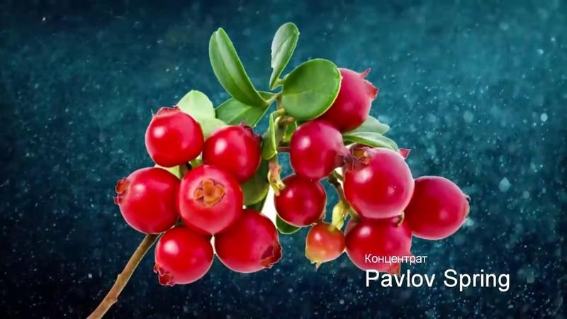 PAVLOV SPRING GLOBAL TREND COMPANY КОНЦЕНТРАТ