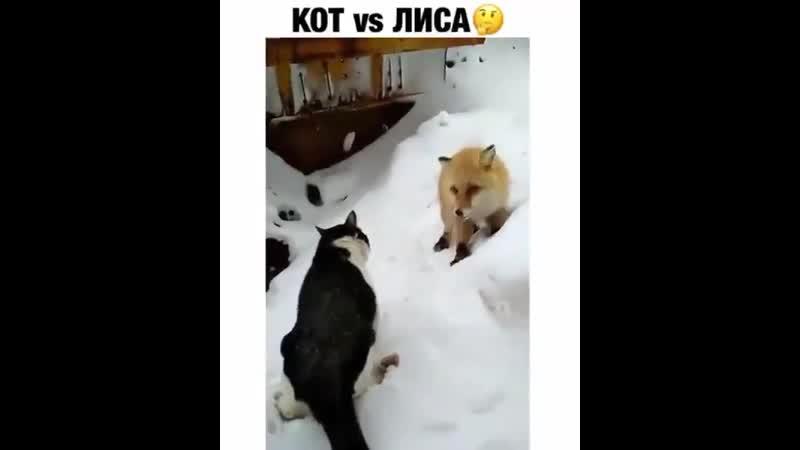 Кот-хозяин, а лиса - гостья ! знай свое место