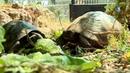 Bessières : à la découverte du refuge des tortues