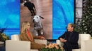 Margot Robbie's Husband Surprised Her with a Rescue Dog