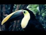 Коста-Рика за полторы минуты