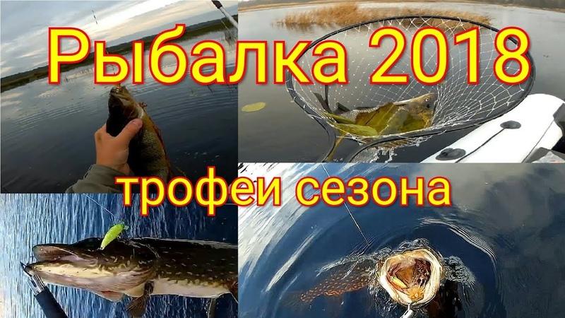 Рыбалка 2018 трофеи сезона