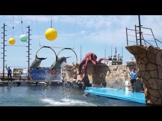 Обзорное видео Дельфинария на Большом Утрише