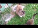 Наш двор. Осеннее утро и сытые кошки