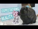 Expectations VS Reality BUNNY EDITION