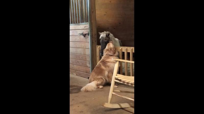 Больная пони устала бороться за жизнь но собака не хотела мириться с потерей подруги и твердо решила спасти лошадь