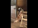 Больная пони устала бороться за жизнь, но собака не хотела мириться с потерей подруги и твердо решила спасти лошадь