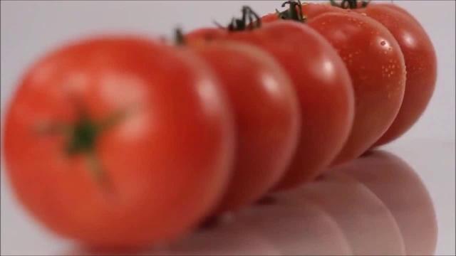 Презентация теплицы нового поколения Niva Greenhouses - VENLO