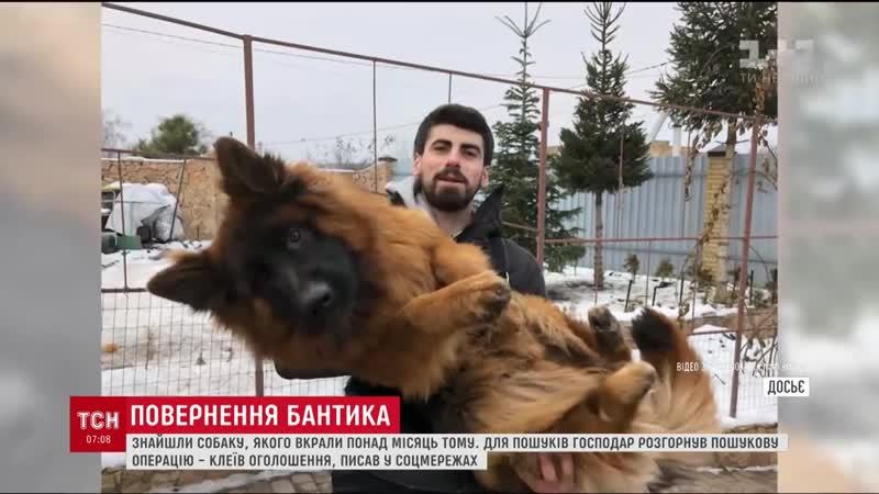 Щасливе повернення Бантика Викраденого в новорічну ніч собаку знайшли