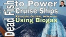 Dead Fish to Power Cruise Ships - Reducing Global Warming Using Biogas - Guardian Article Preview