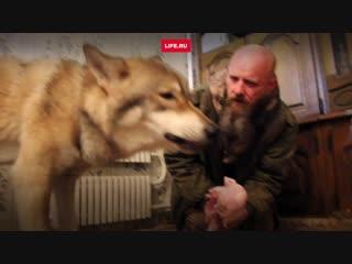 Делит однушку с волком